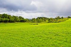 Grönt gräs- fält på den Talgje ön royaltyfria foton