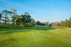 Grönt gräs för golfbana med Bluesky royaltyfri foto