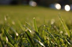 Grönt gräs för makro Royaltyfri Foto