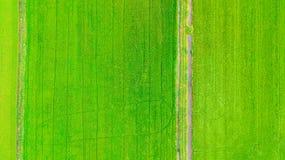 Grönt gräs för rårisfält Fotografering för Bildbyråer