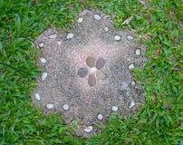 Grönt gräs för stenblommakvarter Arkivbild