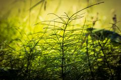 Grönt gräs för träsk royaltyfria bilder