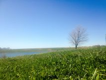 Grönt gräs för vårträd Royaltyfria Bilder