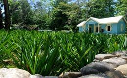 grönt gräs framme av ett blått hus Arkivfoton