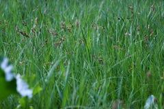 Grönt gräs i ängen i vår fotografering för bildbyråer