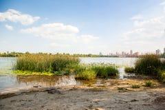 Grönt gräs i floden Royaltyfria Foton