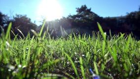 Grönt gräs i konstnärlig sammansättning Royaltyfria Bilder