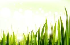 Grönt gräs i morgonen Arkivbild