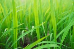 Grönt gräs i morgonljuset Arkivfoton