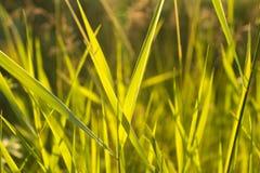 Grönt gräs i panelljus Arkivfoto