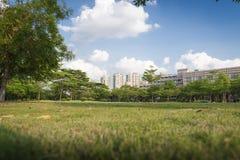 Grönt gräs i parkera Fotografering för Bildbyråer