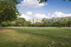 Grönt gräs i parkera Arkivbilder