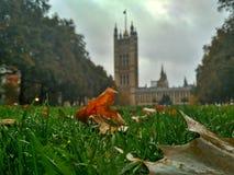 Grönt gräs i parkerar nära parlamentet London Storbritannien arkivfoton