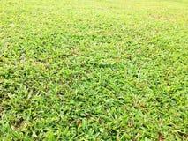 Grönt gräs i sätta in Royaltyfri Fotografi