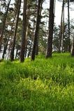 Grönt gräs i skog arkivfoto