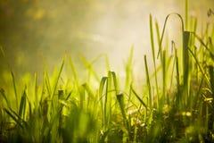 Grönt gräs i skogen fotografering för bildbyråer
