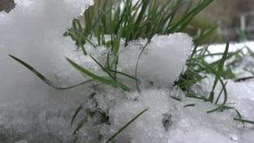 Grönt gräs i snövårbakgrunden arkivfilmer