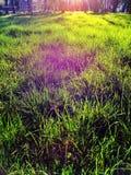 Grönt gräs i solljus Arkivfoto