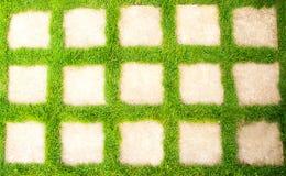 Grönt gräs i trädgården Royaltyfri Fotografi