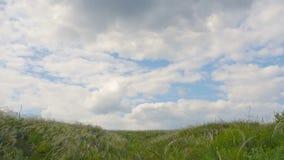 Grönt gräs i vindtidschackningsperioden lager videofilmer