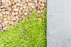 Grönt gräs isolerade och vaggar Arkivfoto