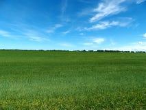 Grönt gräs- lantgårdfält Arkivbild