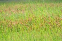 Grönt gräs med closeupen för röda lappar royaltyfri bild