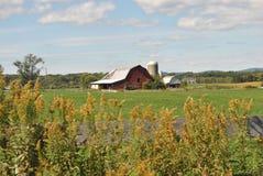 Grönt gräs med den guld- stången och ladugården Arkivfoto