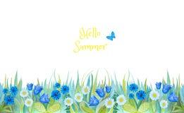 Grönt gräs med den ljusa blåa klockan, blåklinter, kamomill, isolerad bakgrund planterar white royaltyfri illustrationer