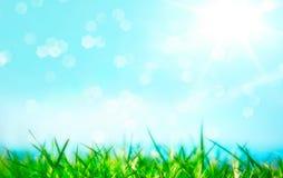 Grönt gräs med den skinande solen Fotografering för Bildbyråer