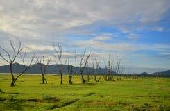 Grönt gräs med det döda trädet Arkivbilder