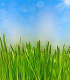 Grönt gräs med droppar av dagg i skyen Arkivfoton