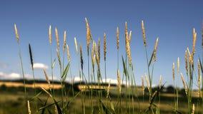 Grönt gräs med en blå himmel, royaltyfri bild