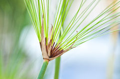 Grönt gräs med grön bakgrund Arkivfoto
