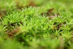 Grönt gräs med krämiga Bokeh arkivfoto