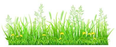 Grönt gräs med maskrosor royaltyfri illustrationer