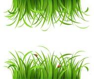 Grönt gräs med nyckelpigor Arkivfoton
