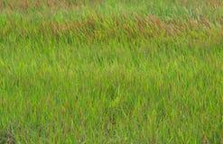 Grönt gräs med röda lappar royaltyfria foton