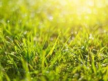 Grönt gräs med regn tappar vårbakgrund arkivbild