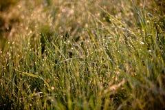 Grönt gräs med regndroppar Arkivfoto