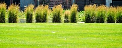 Grönt gräs med växter Arkivfoto