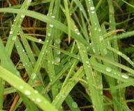 Grönt gräs med watter tappar naturlig textur koppla av för natur royaltyfria bilder