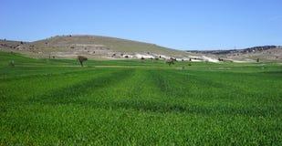 Grönt gräs nära berget Royaltyfria Foton