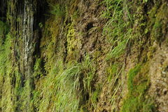 Grönt gräs nära vattenfallet Arkivbilder