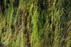 Grönt gräs nära vattenfallet Royaltyfri Fotografi