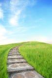Grönt gräs och övre trappa Royaltyfri Fotografi