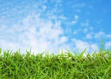 Grönt gräs och blåttsky royaltyfri fotografi