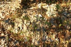 Grönt gräs och bruna trädfilialer på en stenig kulle arkivfoto