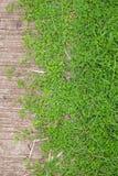 Grönt gräs och cement däckar bakgrund, textur, signal två Royaltyfri Bild