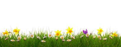 Grönt gräs och färgrika vårblommor